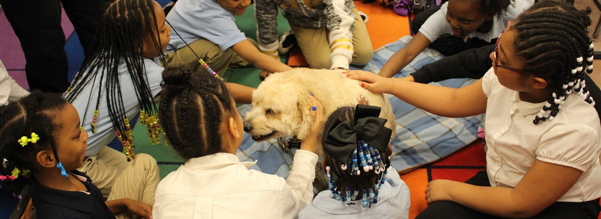 Sophie the Therapy Dog
